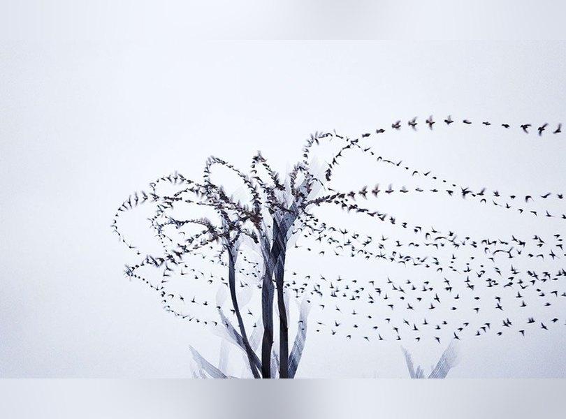 Орнитография: движение птиц в полете   Журнал Esquire.ru