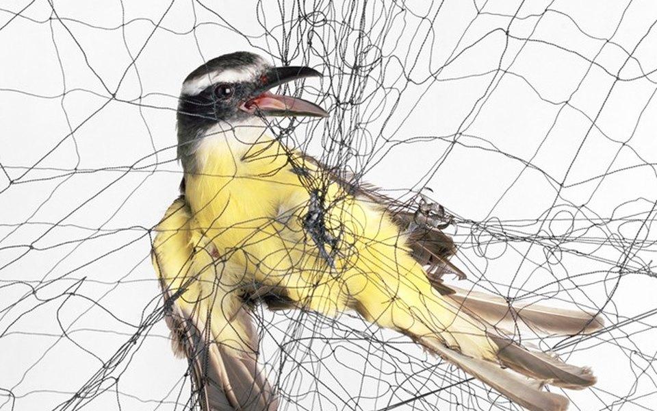 Доставка птицы