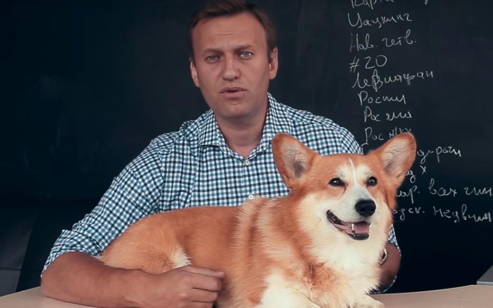 Алексей Навальный ополетах собак Шувалова