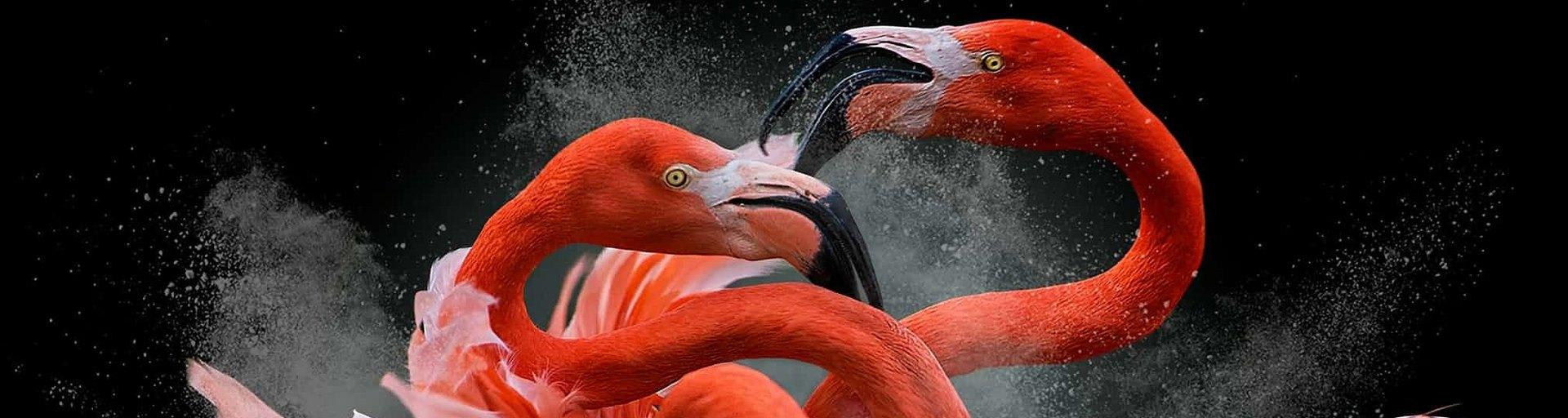 Лучшие фотографии птиц сконкурса Bird Photographer of the Year