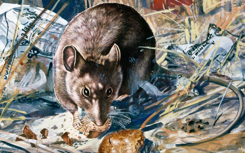 «Кофейная мышь»: рассказ Дмитрия Липскерова